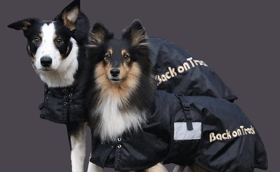 Doglead Back on Track 1