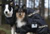 Doglead Back on Track