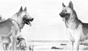 Pamlsky a konzervy pro psy Fresco Dog