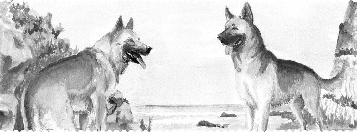Pamlsky pro psy Fresco Dog